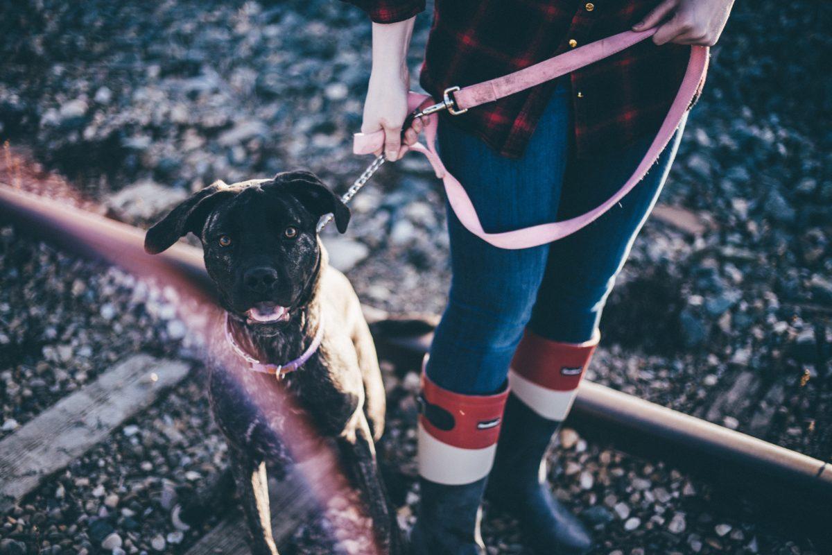 bijbaantje-volwassenen-honden-uitlaten