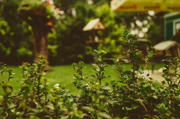 groenere-tuin