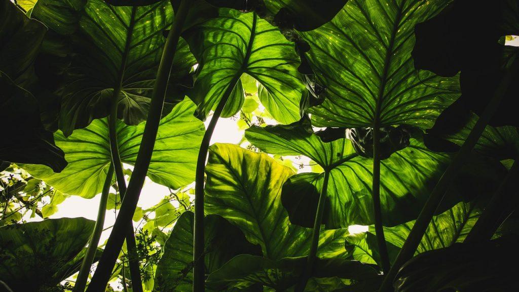 groenere-tuin 2