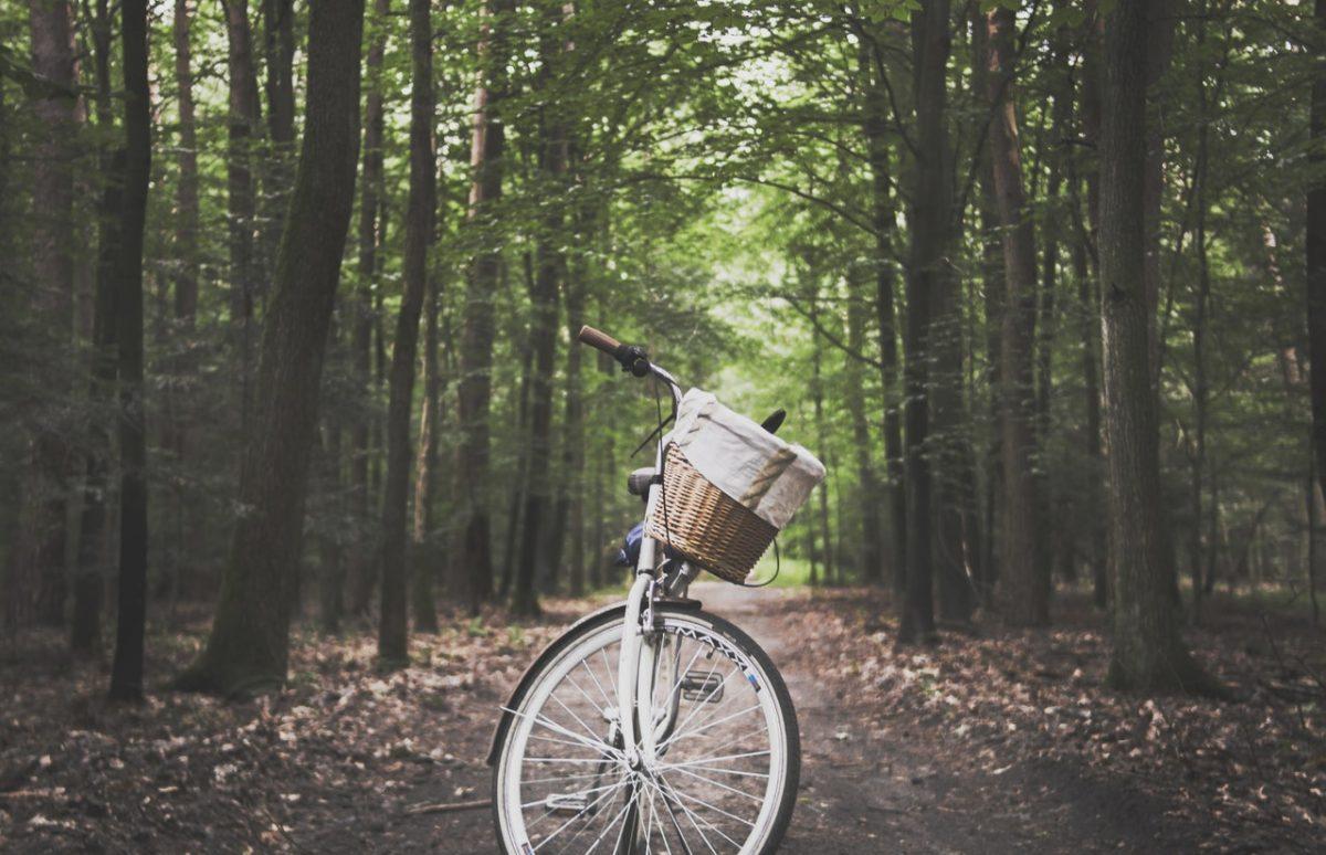 damesfiets in het bos