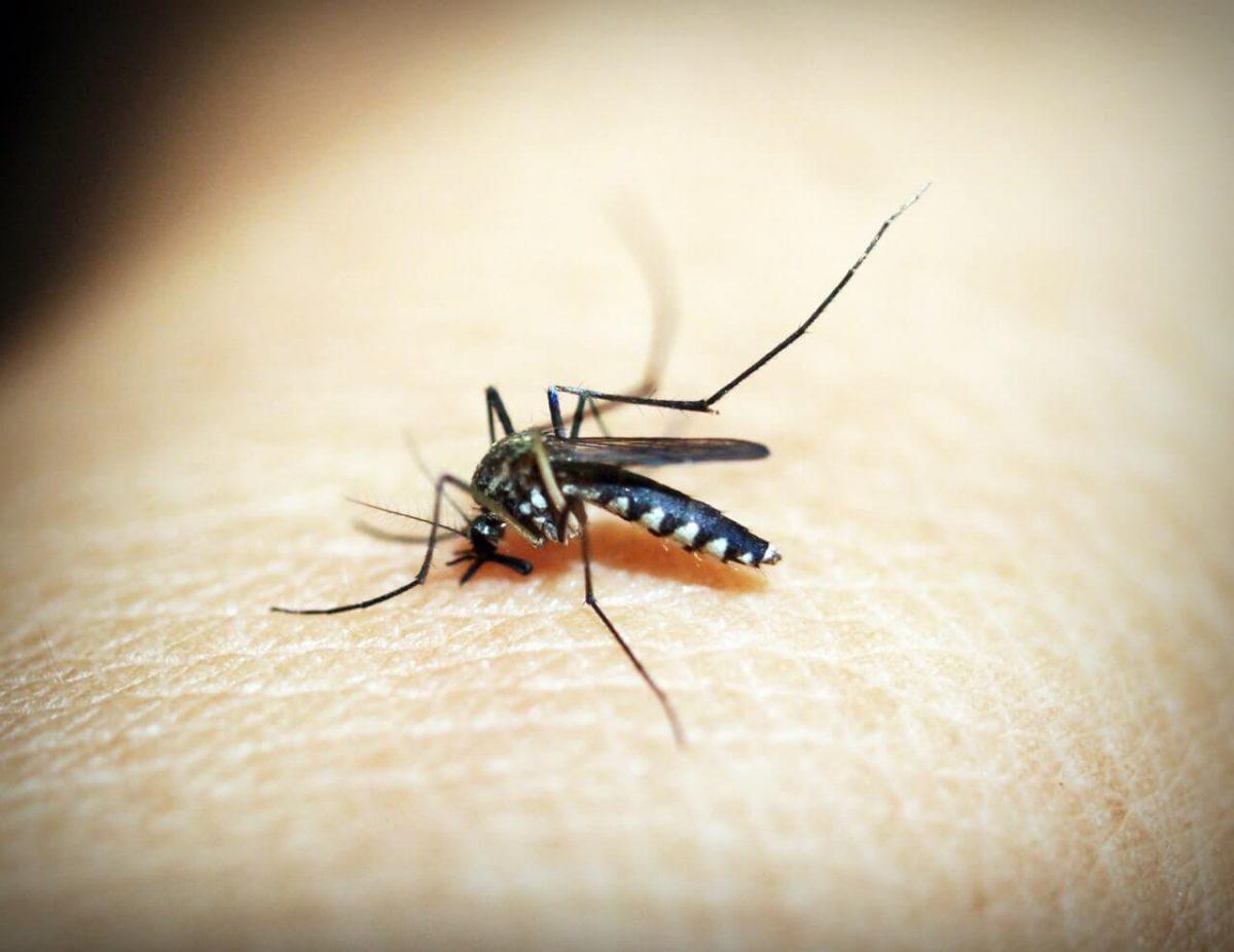 wat-helpt-tegen-muggenbeten-tipify-2