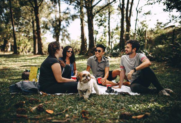 picknick-tips-tipify