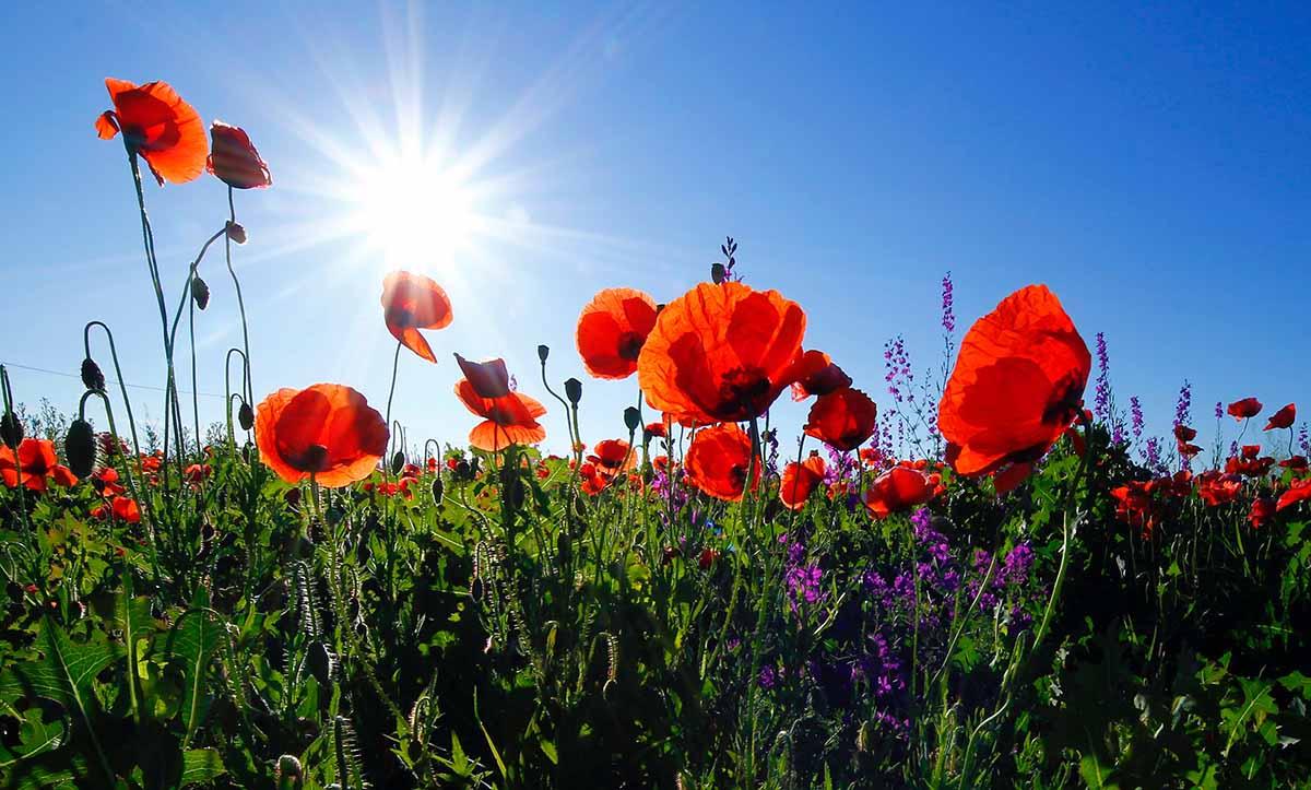 de-zomer-bloemen-tipify