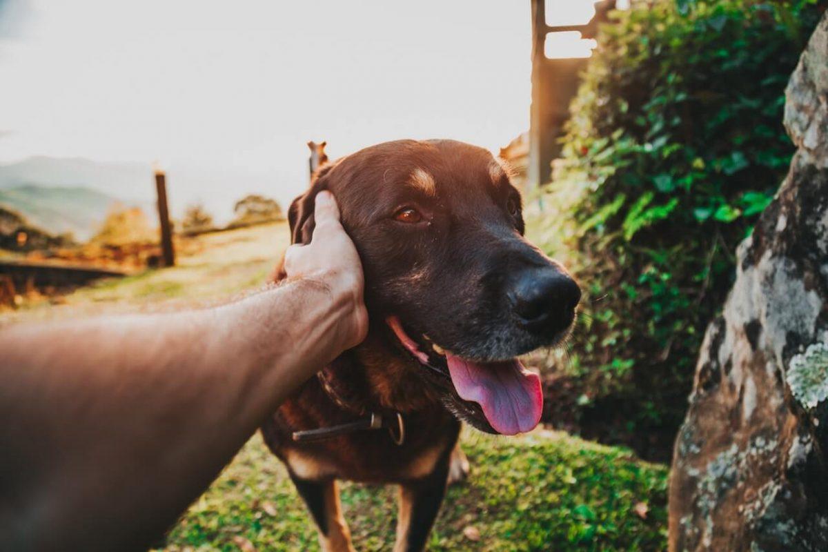 hond-zomer-tipify-2