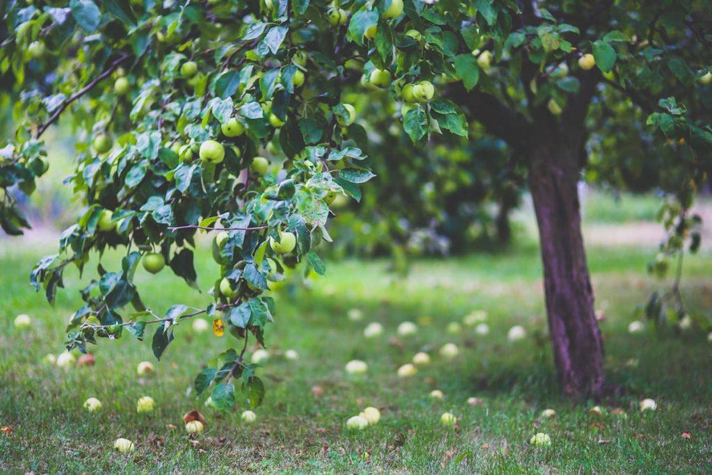 fruit-boerderij-tipify