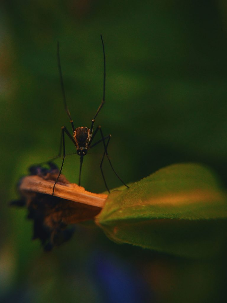 zomer-insecten-tipify