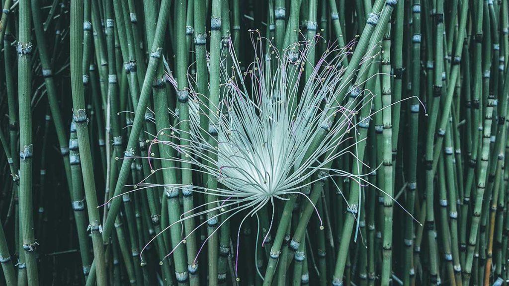 bamboe-groen-tipify