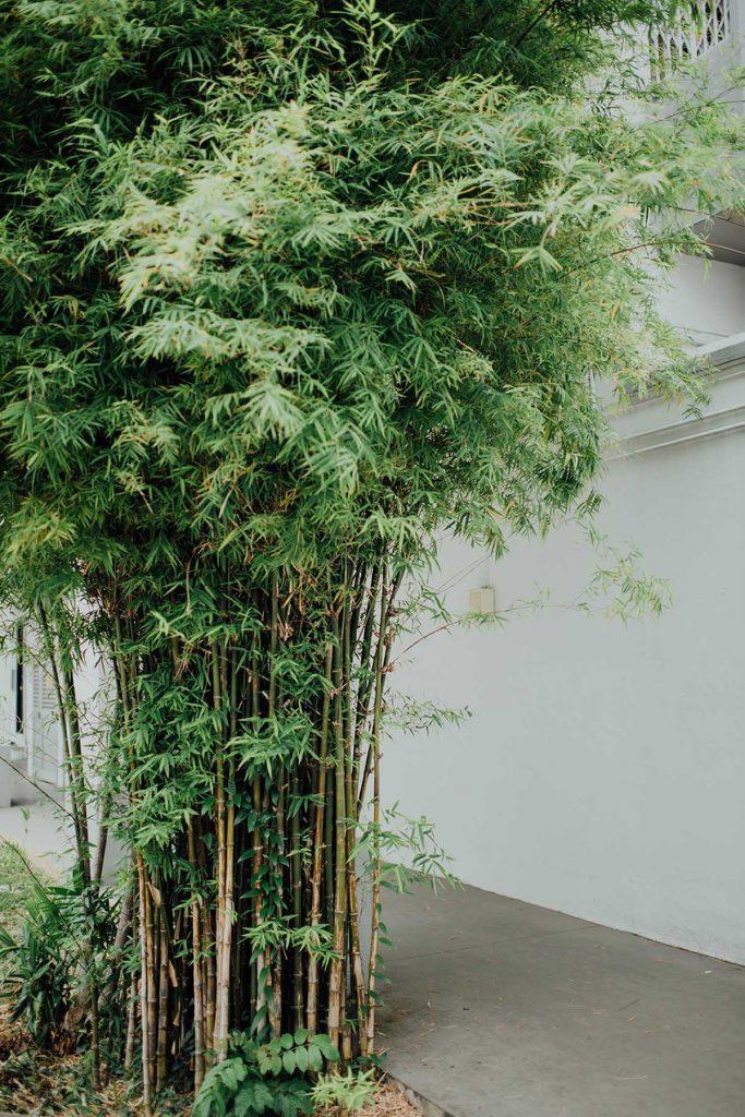 bamboe-hoog