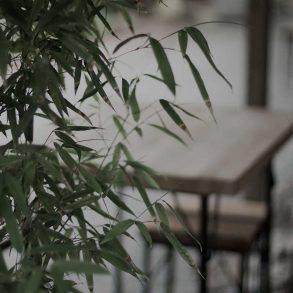 bamboe-in-de-tuin-tipify