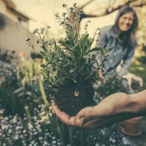 makkelijke-tuin-tipify