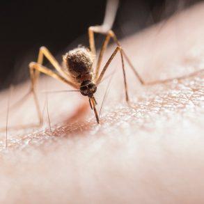 tips-tegen-muggen-tipify