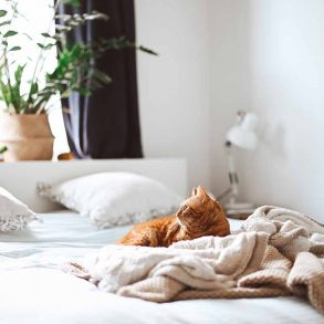bed-kopen-tips-tipify