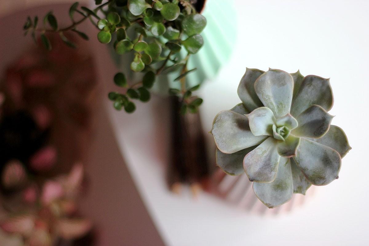 geen-groene-vingers-planten-tipify