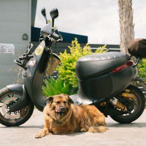 voordelen-elektrische-scooter-tipify