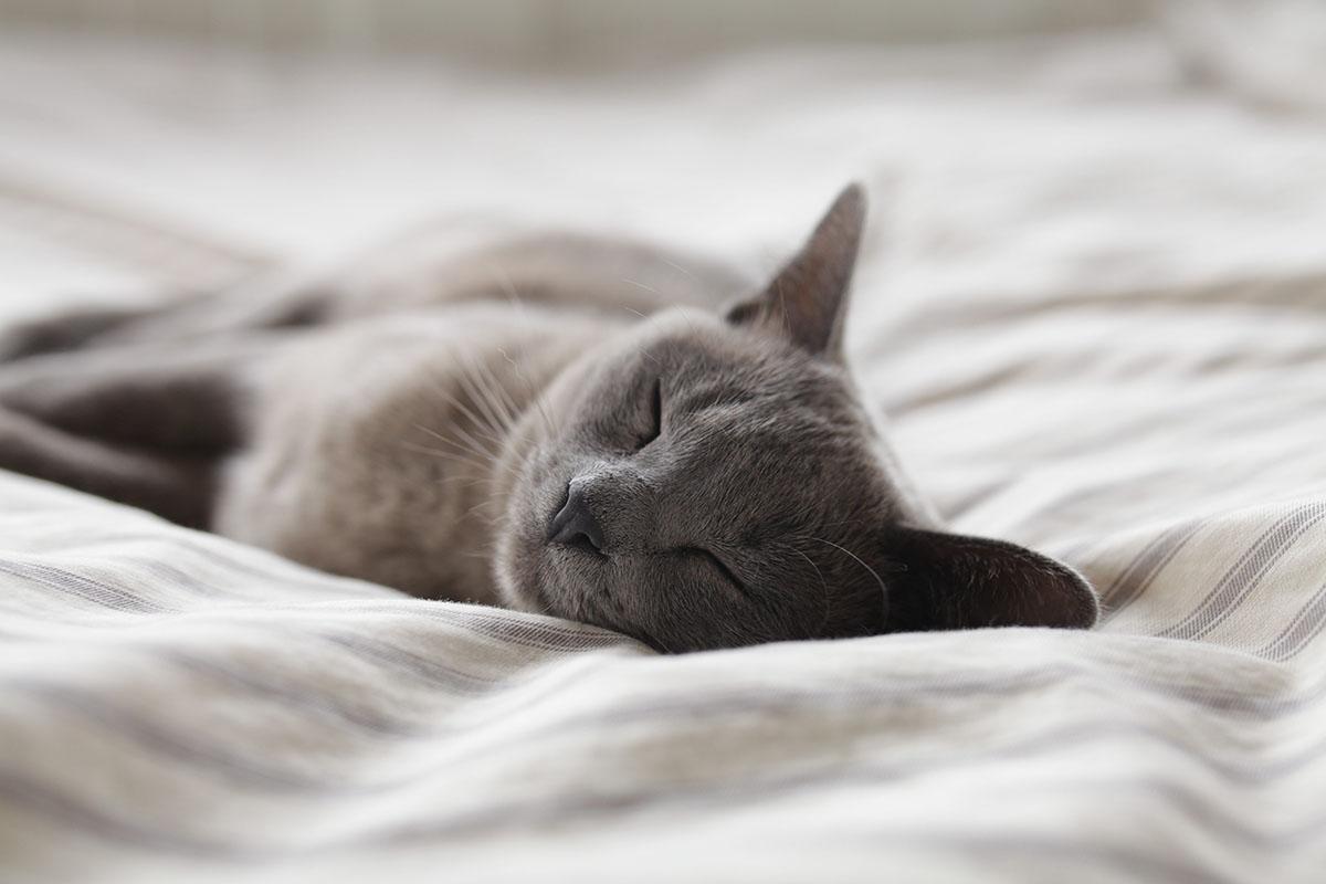slapen-tips-tipify