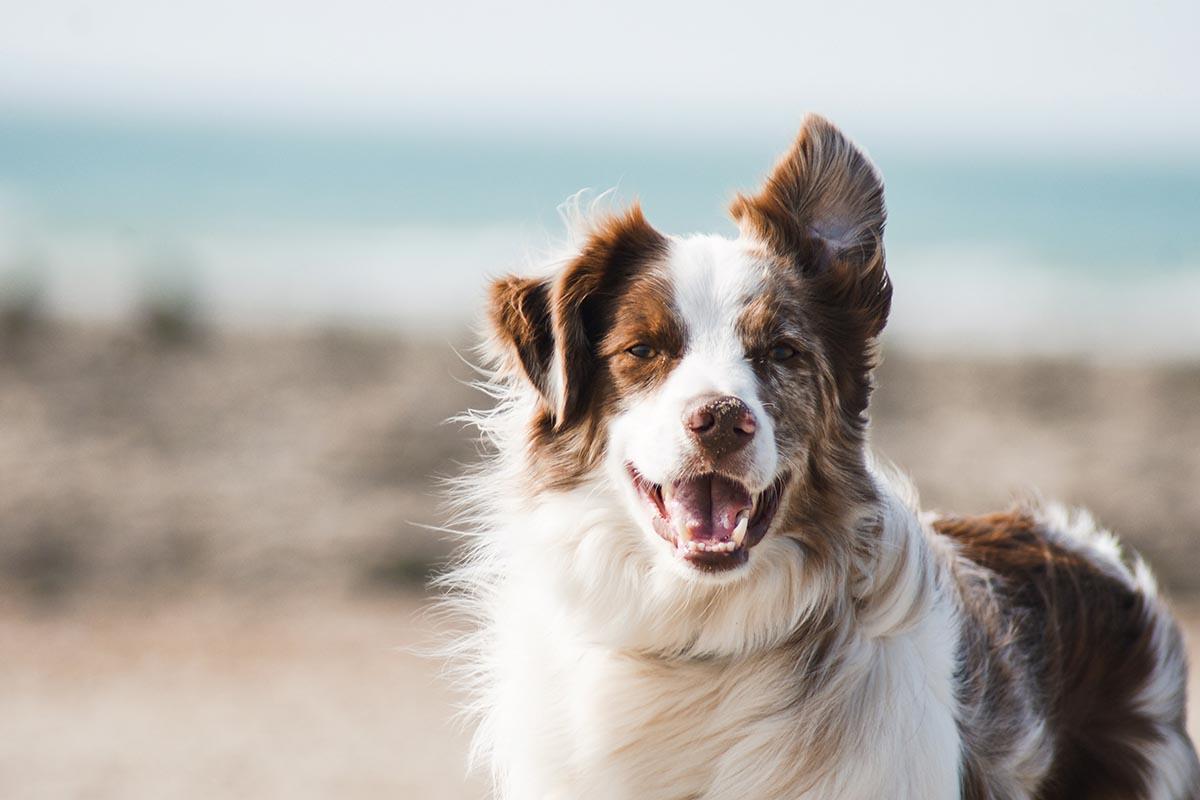 dierenverzekering-tips-tipify